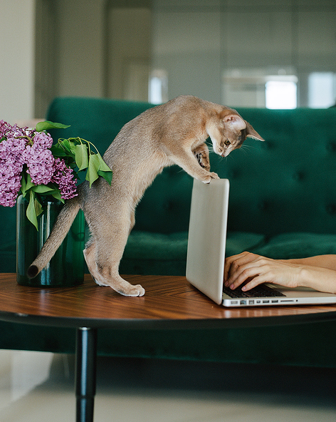 Kitten looking over a laptop as someone types on it